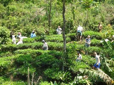 Botschafter-Team global fairstrickt auf der Teeplantage ihres Fairhandelspartners